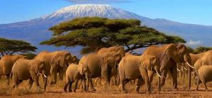 a list of the top best Tours operators and Travel Agencies in Kenya , Nairobi Safari companies