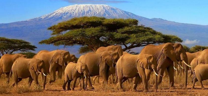 a list of the top best Tours operators and Travel Agencies in Kenya , Nairobi Safari companies