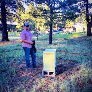 Royal Kenyon BeeWorks bee pollination service in Flagstaff.