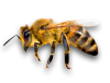 9_bees