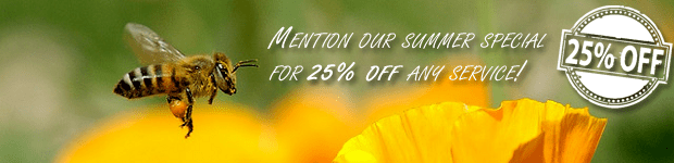 Summer Special Bee Removal Discount
