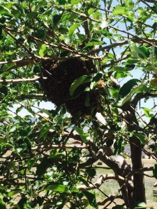 Prescott Valley Bee Swarm Ball