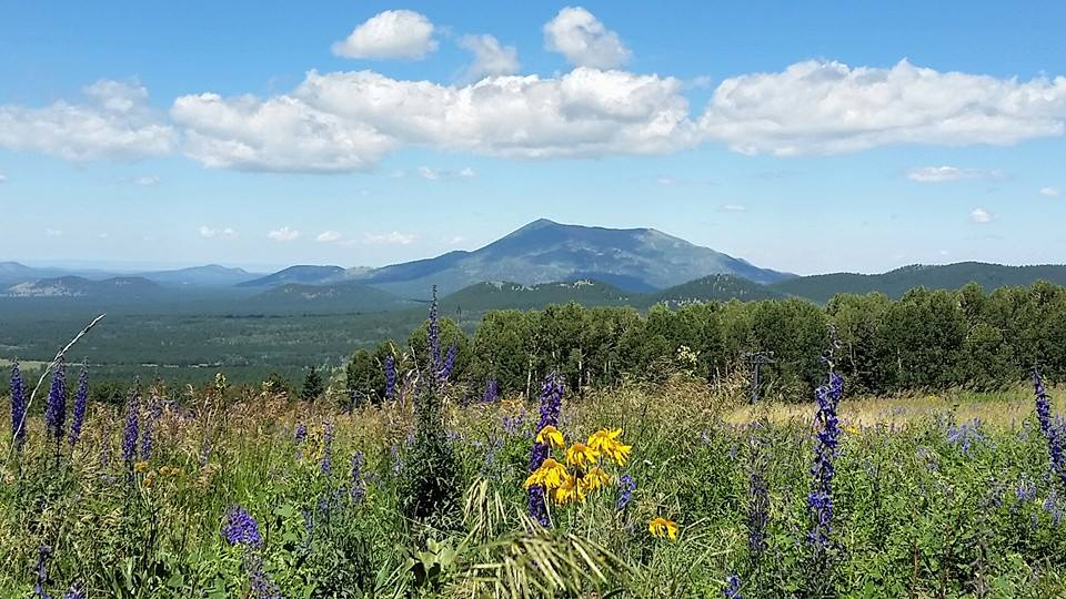 flagstaff-mountain-flowers