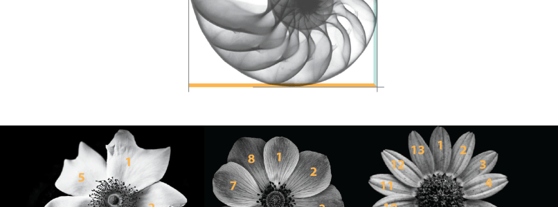 Golden Ratio in Nature Keon Designs Pravin Ghodke