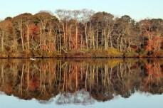 treereflection, Long Island