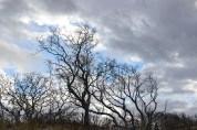 treessky