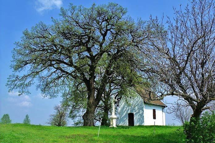 Az-év-fája