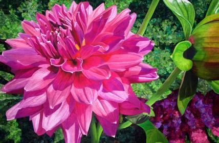 Dazzling Dahlia, Andrea Brokenshire