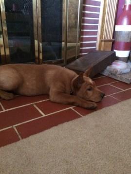 Bobbin resting