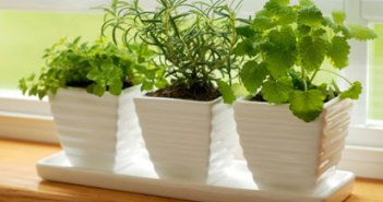 Vastu Sashtra Indoor-plants