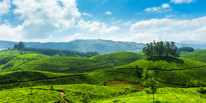 Honeymoon Trip In Kerala Hill Stations