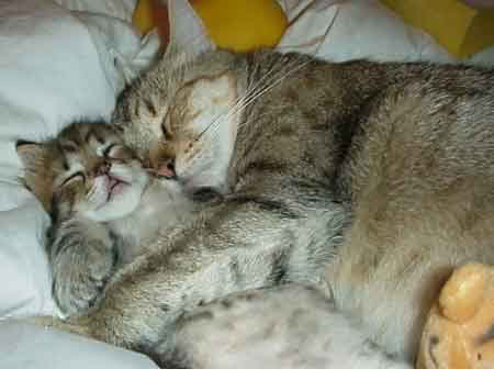 Meow...! Eh...sayang pun tahu sunnah Nabi ye...meow...romantiknye... sukalah kalau selalu camni.