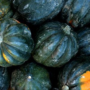 Acorn Squash Aug 15 - Nov 30