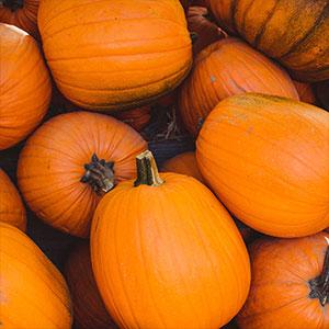 Pumpkins Sept - Thanksgiving