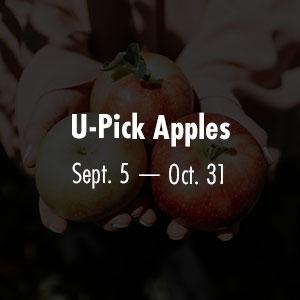Apples Sept 5 - Oct 31