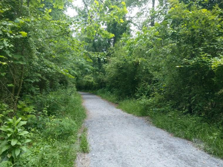 Green forest park walks - Keri Elaine