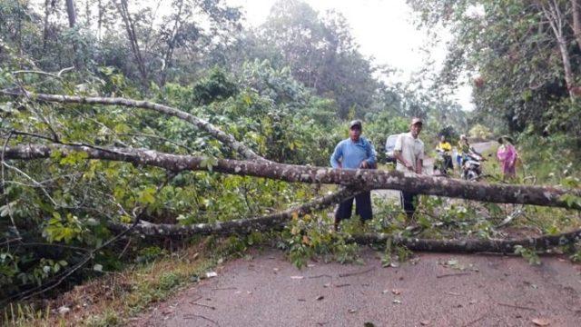 Photo of Hujan Angin, Pohon Tumbang Putuskan Aliran Listrik