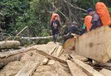 Photo of Tim TPCU Temukan Aktivitas Perambahan Hutan Illegal di Kawasan TNKS
