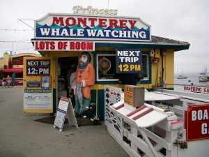 Princess Monterey Whale Watching, Old Fisherman's Wharf, Monterey California