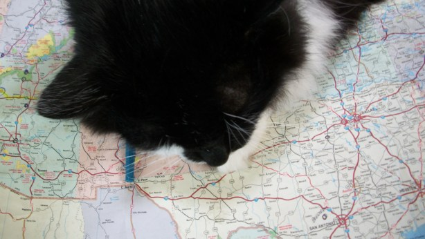 Checkers sleeping on a map.