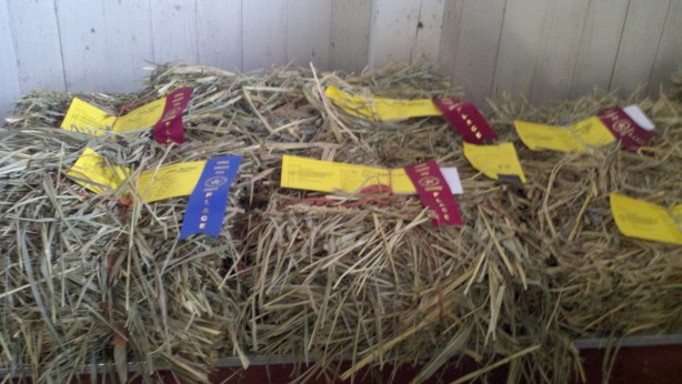 Judging hay at the county fair.