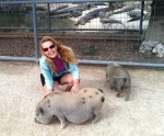 Petting the pot bellied pigs.