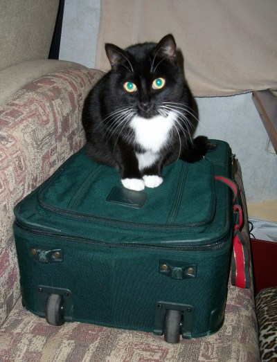 Pye, sitting on my suitcase, wanting to go.