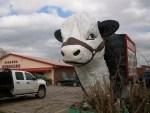 Here's Bessie the Sirloin Stockade Cow.