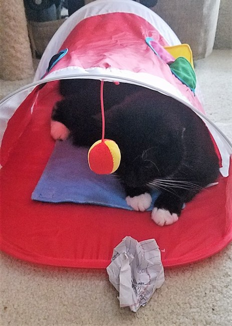 "I call the cat tunnel ""the Chunnel""."