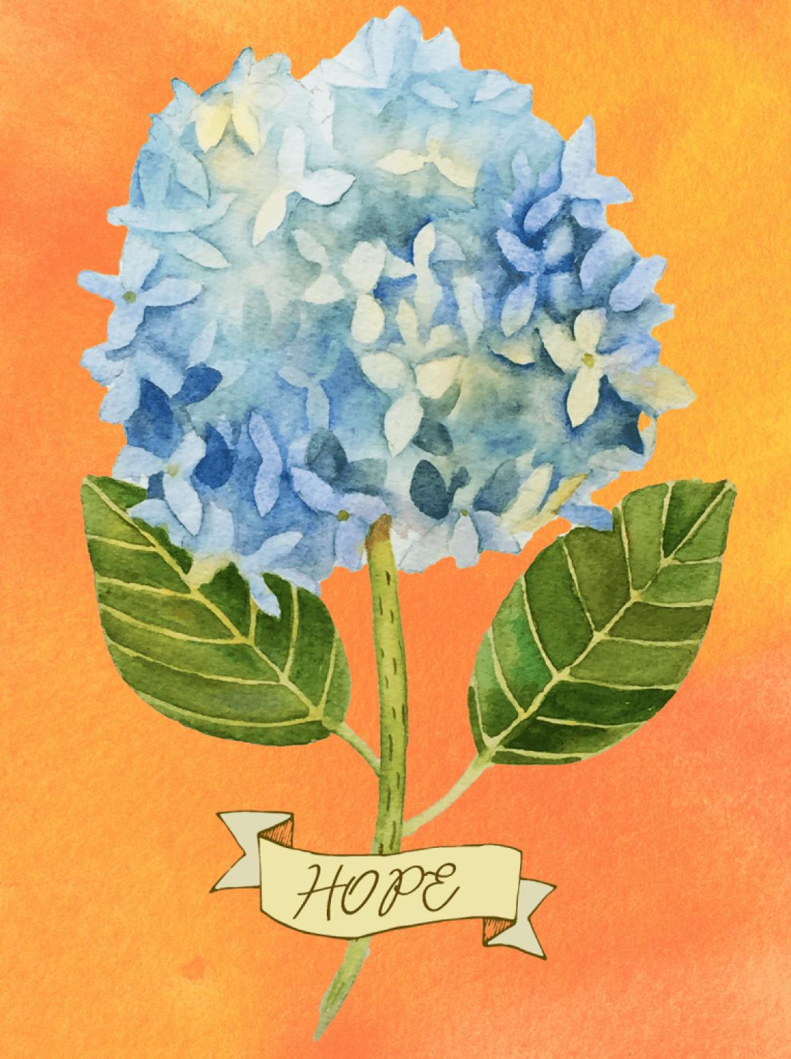 Hope Hydrangea