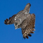 Wildlife Photography 2013 – my year in review (part three)
