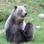 Wildlife photographers revel in observing interesting animal behavior