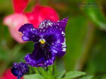 Black and Purple Flower