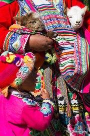 Cusco Lambs