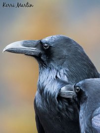 Raven Couple