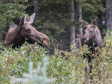 Moose and Mom