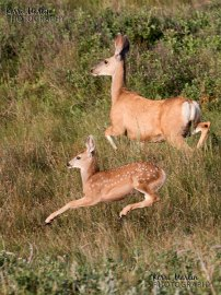 Deer Baby and Mom