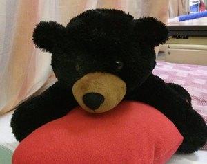 Cardiac Bear