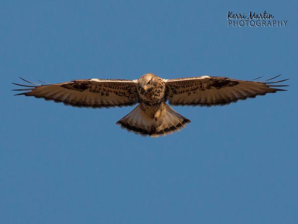 Identifying Birds of Alberta based on Flight Patterns