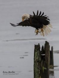 EagleTake Off