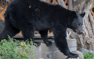 Close encounters of the bear kind = manifestation of my wildest dreams (Part 1 of 3)