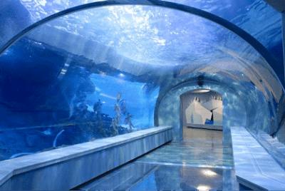 Detroit-Zoo-Penguin-Habitat