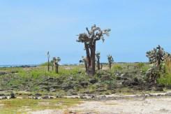 Beachside Cacti