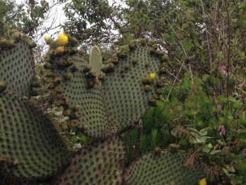 Phallic Cacti - Heart and ??