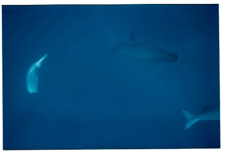swimming with sharks great barrier reef