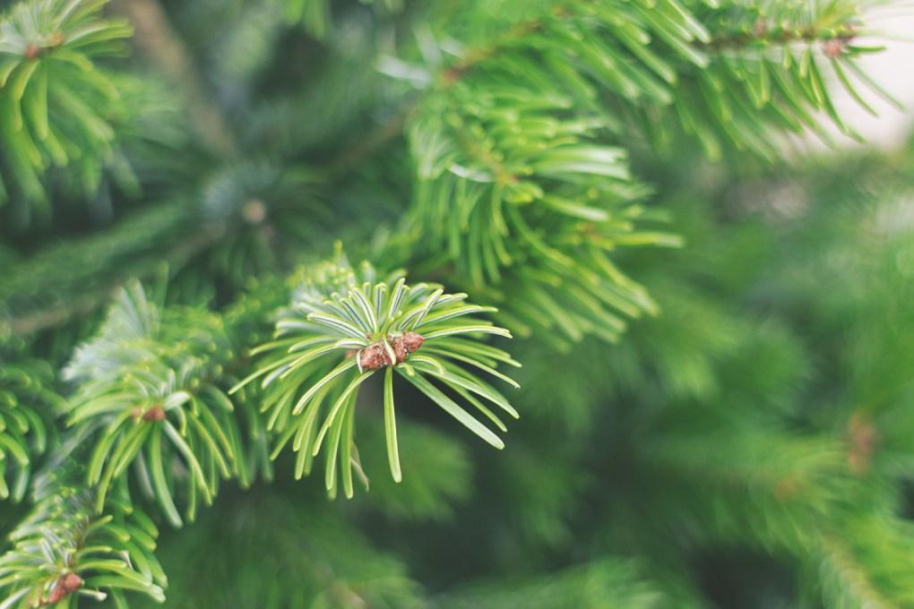 Nordmann kerstboom online bestellen tips verzorgen - kerstboombezorging.nl