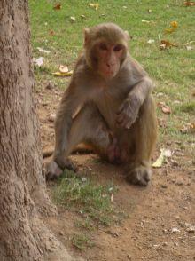 Agra-India-street-photography-pablo-kersz--01