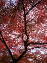 Kansai-Nara-japan-photography-pablo-kersz29