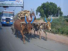 india-bundelkhard--street-photography-pablo-kersz--41