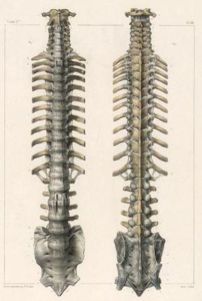 human-body-vintage-scientific-illustration-naturalist-drawing-0001
